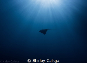 Spotted this ray in Mgarr ix-Xini on the island of Gozo..... by Shirley Calleja