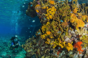 Shore dive in Cozumel by Pepe Suarez
