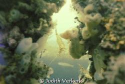 """Scharendijke, wreck """"De zeehond"""" 2 shrimps. Zeeland by Judith Verkerk"""