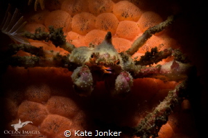 Hotlips!