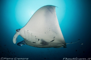 Cleaning time - A manta at the cleaning station by Pietro Cremone