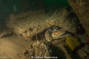 Lobster been spotted right near UB55 Germans sub, ww1 by Andrius Stanevicius