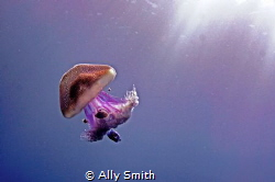 Photograph of a jellyfish caught in a shaft of sunlight a... by Ally Smith