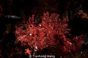 looklike the artwork.. by Tianhong Wang