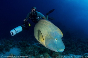 Diver and Napoleon Wrasse by Pietro Cremone