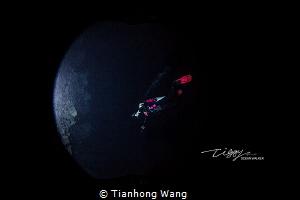 FLY TO MOON  by Tianhong Wang