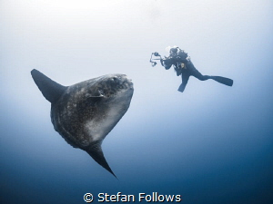 The Longing