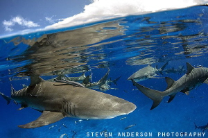 Action at the surface is always exciting to photograph. ... by Steven Anderson