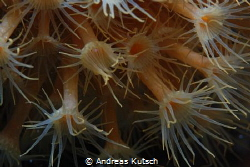 Macro shot in the med, adriatic croatia by Andreas Kutsch