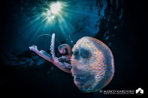 Jellyfish by Marco Gargiulo