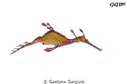 Minimal use of PS, I used 3 strobes to create the image. ... by Gaetano Gargiulo