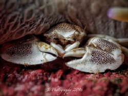 Porcelain crab on red carpet. 