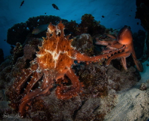 Octoporn.  I would have preferred a different category fo... by Steven Miller