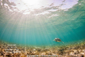 """""""Turtle In The Sunlight"""" A turtle glides over the reef u... by Susannah H. Snowden-Smith"""