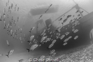 """""""Storm the Ship"""" Horse-eyed Jacks crusiing past the Kitt... by Chase Darnell"""