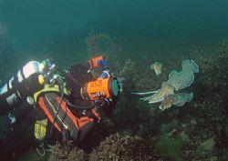 Dirk and cuttlefish. Devon. 16mm. by Mark Thomas