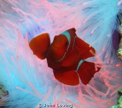 iridescent looking by John Loving