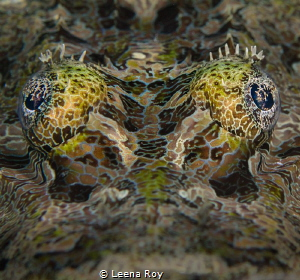Crocodile fish by Leena Roy