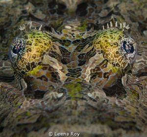 Crocodile fish by Leena Roy