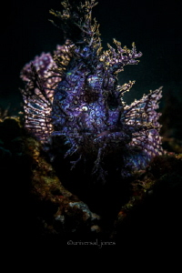 Rhinopias frondosa