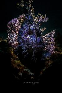 Rhinopias frondosa  Back light with Retra  splash by Wayne Jones