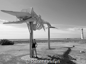 Lanzarote, spermwhale washed ashore is now touristic sigh... by Pieter Firlefyn