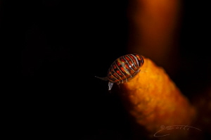 ~ Lady Bug ~ by Geo Cloete