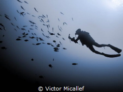 Diver Photographer in silhouette. by Victor Micallef