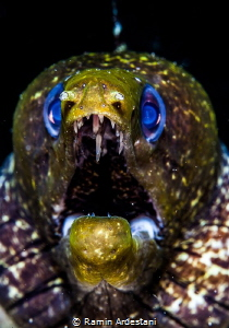 MORAY EEL by Ramin Ardestani