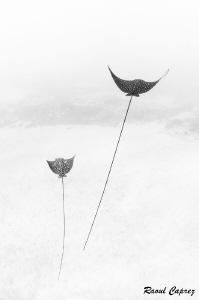 Buddies by Raoul Caprez