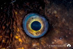 Mediterranean Mooray eye by Marco Gargiulo