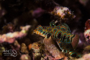 Dragonet  A first time for me. A pituresque mandarin tak... by Mona Dienhart