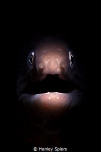 Eels Always Look Surprised by Henley Spiers