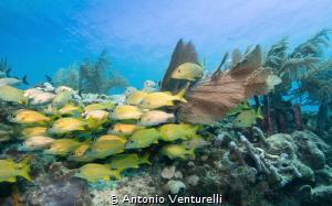 shallow reef by Antonio Venturelli