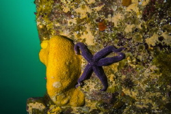 Sponge, Añihue Reserve by Felipe Gonzalez