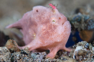 Pink Much? by Henley Spiers