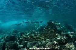 """""""aquarium""""........  Atlantic Ocean - Teneriffa Island ... by Claudia Weber-Gebert"""