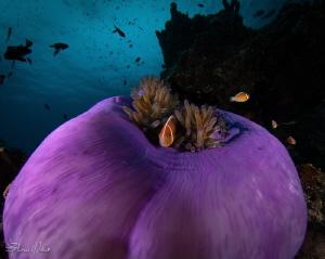 Purple Mountain Majesty by Steven Miller