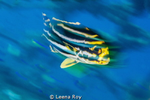 In motion by Leena Roy
