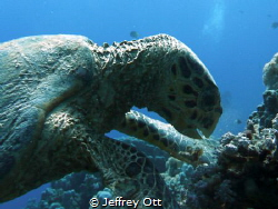 This creature was totally comfortable with my close posit... by Jeffrey Ott