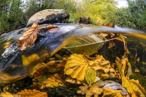 Arn river (France) by Mathieu Foulquié