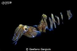 @ warp speed... by Gaetano Gargiulo