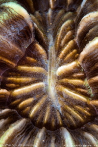 Polyp coral by Pietro Cremone