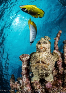 Frogfish: Looking Down on the Upside World by Tony Cherbas