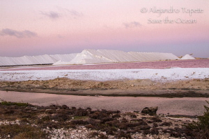 Salt Lake, Bonaire by Alejandro Topete