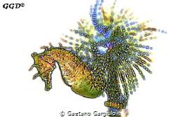 The mad sea-horse and its fireworks by Gaetano Gargiulo