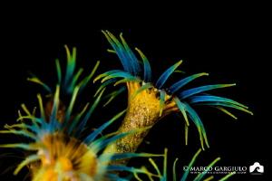Technicolor by Marco Gargiulo