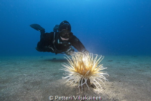 Anemone with diver by Petteri Viljakainen