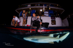 Nurse sharks around the boat in the evening by Tony Ho