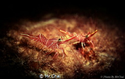 The square eyeball